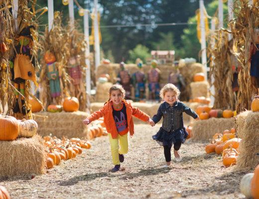 icash-pumpkin-patch