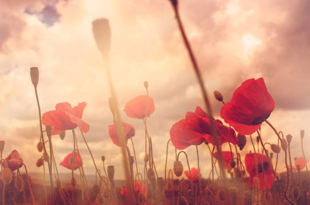 5 GREAT WAYS TO OBSERVE REMEMBRANCE DAY